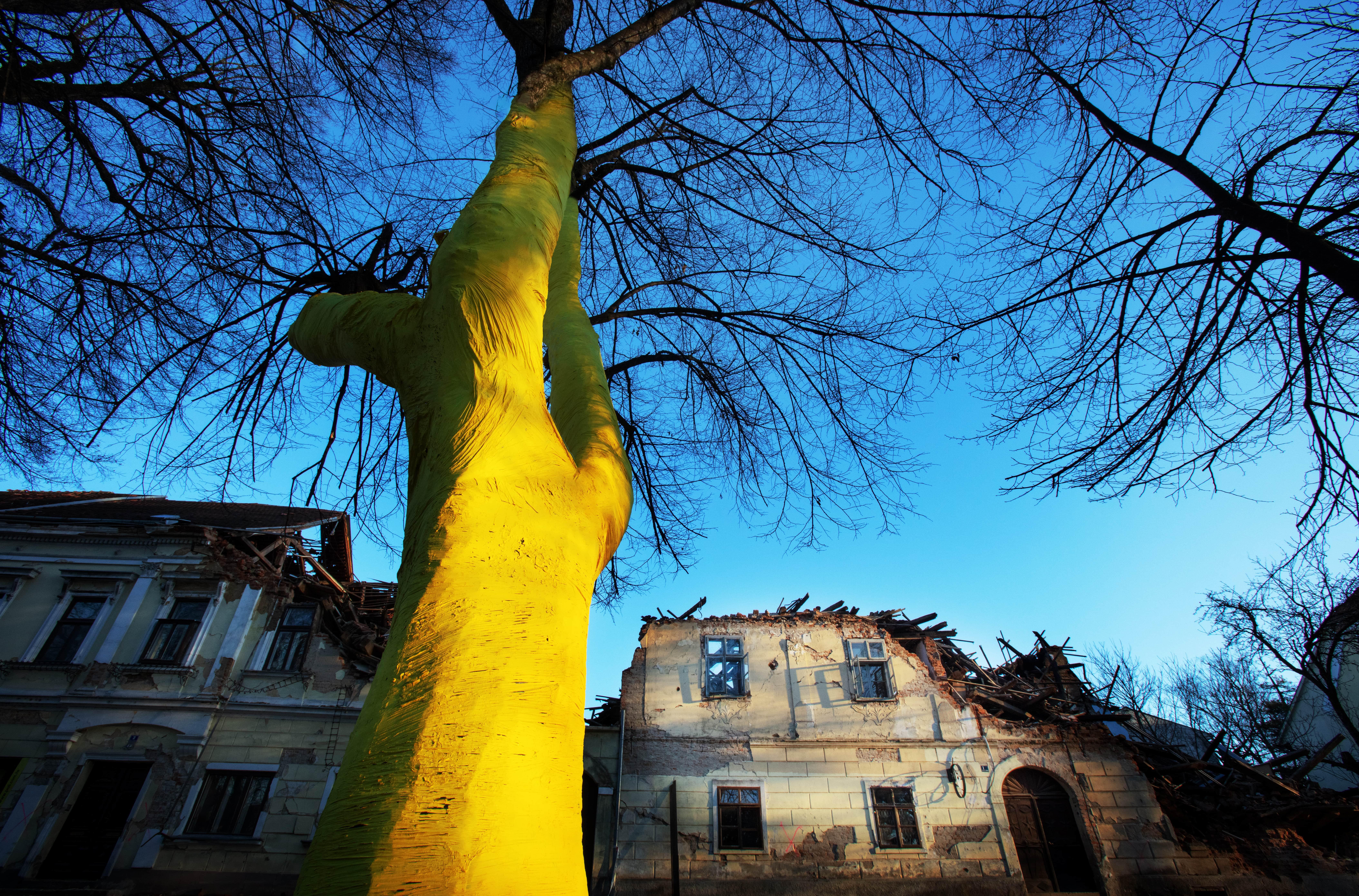 Fotografija Damira Hoyke. Obojeno stablo simbolizira nadu i optimizam.